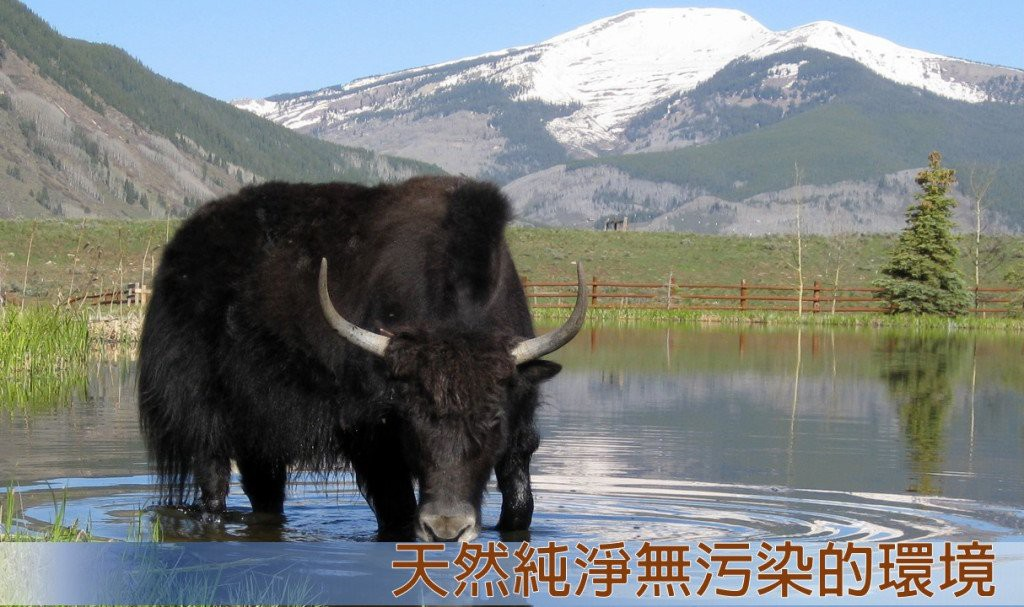petalkr-yak-cheese-introduction-v2-1024x607
